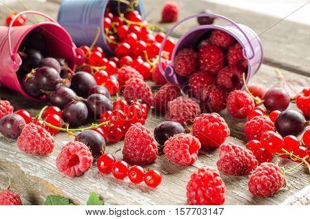 Seasonal Ripe Berries. Harvest. Red Currants, Raspberries And Gooseberries.