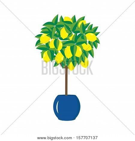 lemon tree in the pot bright flat lemons and leaves vector