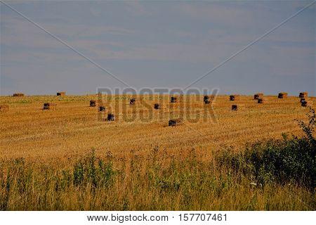 The many hay bales sitting on the farmland