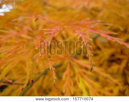 macro photo for bright backgrounds leaves as a source of background for design and photo shop