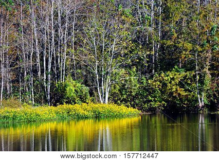 North Louisiana slough shows beauty in its wildflowers which are reflected in the still surface of the water.