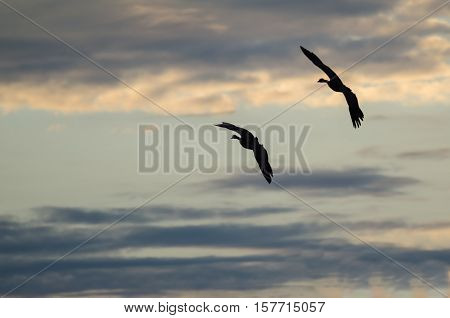 Two Silhouetted Geese Flying in the Beautiful Sunset Sky