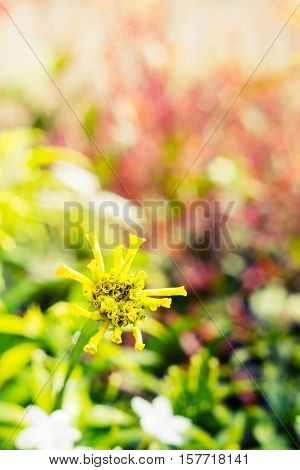 Vintage landscape nature flower background Yellow flower with light bokeh nature blure background