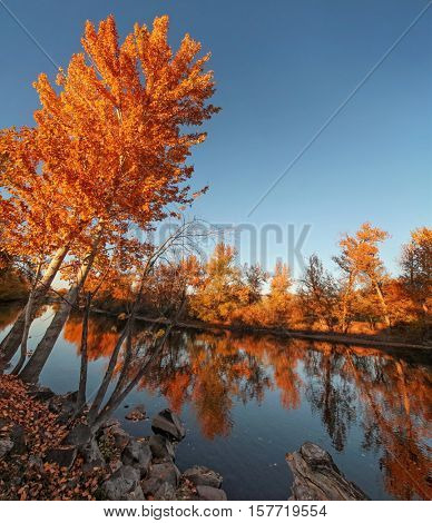 a large orange tree full of leaves ready to fall on a bright autumn day in a local public park with the sun setting behind the river with reflections