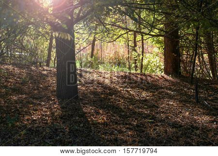 a grove of trees in silhouette on a bright autumn day in a local public park with the sun setting behind creating a beautiful lens flare