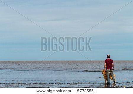 Man Standing On The Beach Next To A Golden Retriever Dog Viewed From Behind
