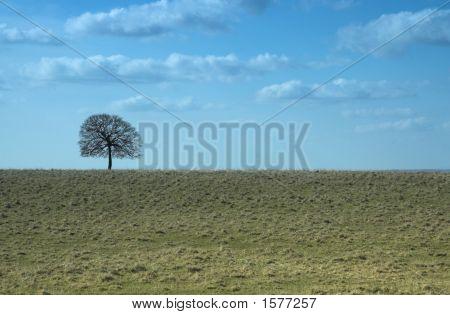 Single tree left of landscape. Horizon