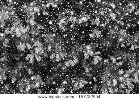 Young Shoots Of Pine Tree Background Texture With Shiny Snowfall Black And White