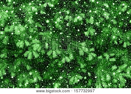 Young Shoots Of Green Pine Tree With Shiny Snowfall