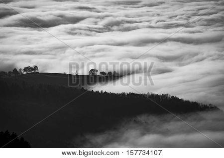monochrome image of cloud swept treed landscape
