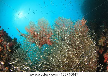 Coral, fish and sea