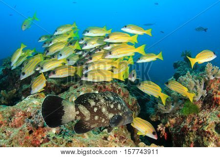 Snappers and grouper fish