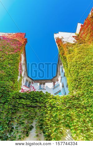 City Building In Paris Covered With Vine