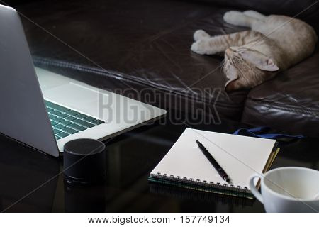 Laptop notebook and coffee cup on mirror table with kitten sleeping on black sofa in living room