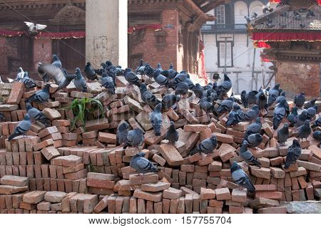 Pigeons on the Durbar square Kathmandu Nepal