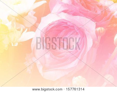 Pink rose flower bouquet background made with color filter effect