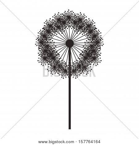 silhouette dandelion with stem and pistil vector illustration