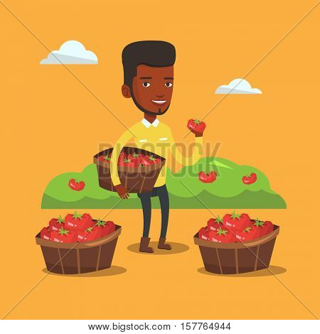 African farmer holding box with tomatoes. Farmer standing near boxes with tomatoes and showing tomato on the background of field with bushes of tomatoes. Vector flat design illustration. Square layout