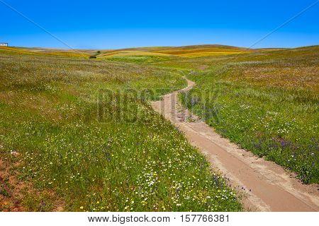 Via de la Plata way in Extremadura Spain to Santiago compostela