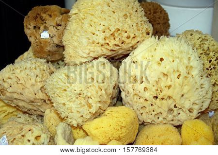 Natural sponges for sale in the old town Rethymno Crete Greece Europe.