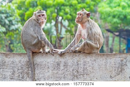 Two monkeys while holding their hands on the wall