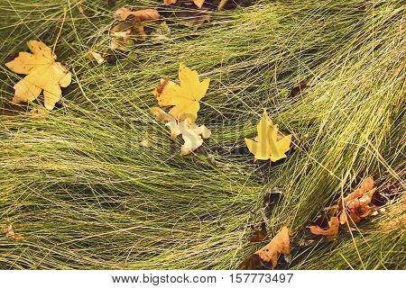 Autumn fall forest leaf on a grass textute background