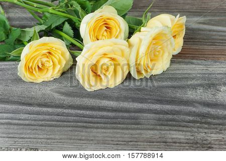 Bouquet of yellow roses lying on the background of the old wooden unpainted boards