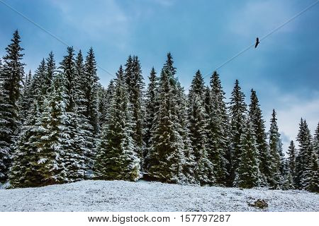Heavy rain clouds flying over mountains.  The concept of eco-tourism. Evergreen forests in the valley covered with the first snow. The landscape of the Dolomites in the snow