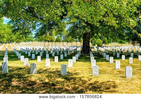WASHINGTON D.C.,USA - AUGUST 15,2016 : Tombstones under a tree at the Arlington National Cemetery in Virginia near Washington D.C.