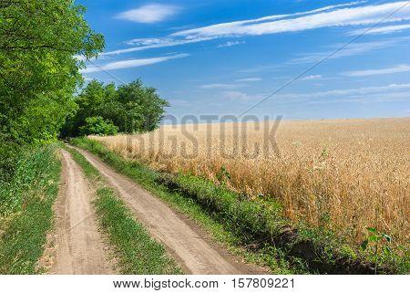Country road beside corn field in Ukraine at summer season.