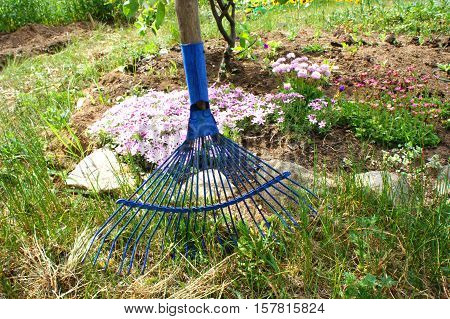 Fan rake in the garden. Blue rake in the garden
