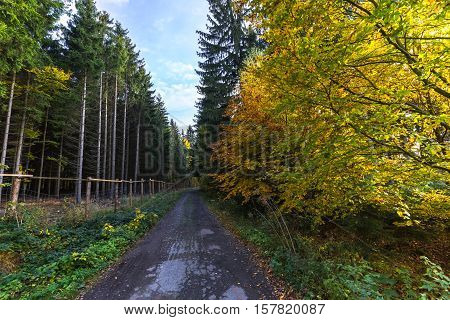 Forest path and colored leaves on trees. Colorful autumn and Moravian landscape Zdarna.