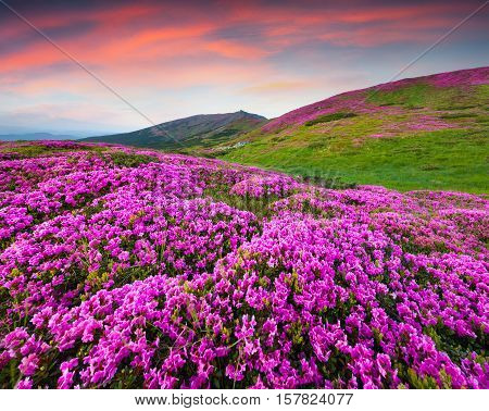 Colorful Summer Scene In The Mountains.