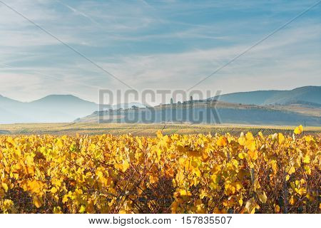 Landscape with autumn vineyards of Route des Vin, France, Alsace
