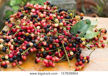 antidesma puncticulatum Miq.Mamao (thai name) Thailand fruit with medicinal properties. known as Mao Luang is a species of plant in the Phyllanthaceae family. It was early classified as a genus within family Euphorbiaceae but later moved into family Phyll