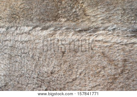 Fur sheepskin shorn natural. fluffy plush background