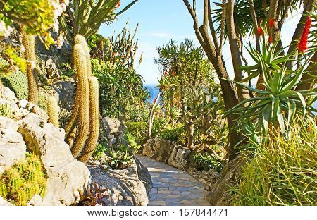 The winding way among the rocky hills with cactuses and blooming agaves in Jardin Exotique botanical garden Monaco.