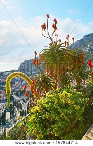 The scenic plants in Exotic Garden of Monaco located on the steep rocky and overlooking the city.