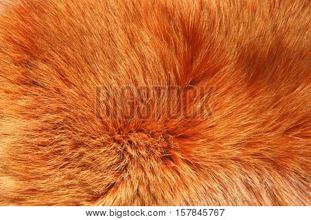 Background red Fox fur. Thick red Fox fur