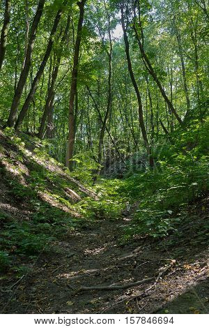 forest landscape with ravine sunny summer day