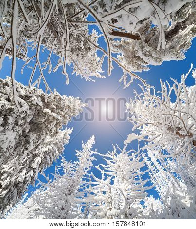Upward View Of The Sky In A Snowy Forest