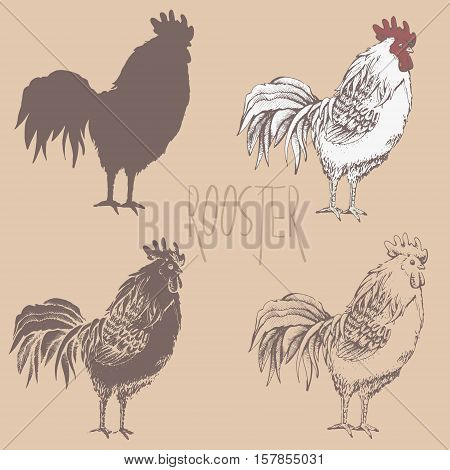Illustration profile standing roosters. Four variants. Silhouette, outline, fill with outlines, fill only. Handmade drawing cock. Vintage engraving style. Rooster symbol of Chinese New Year 2017