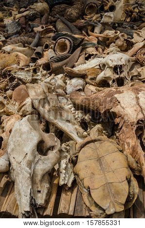 Parts of dead animals offered as cures and talismans on outdoor voodoo fetish market in Benin, West Africa.