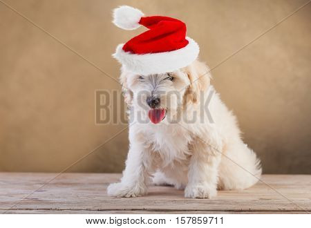 Doggy with santa hat sitting on wooden floor