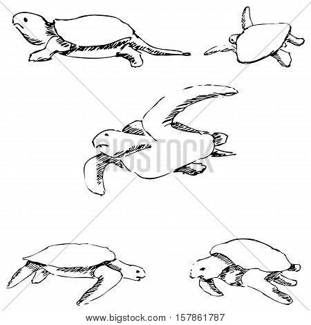Turtles. Pencil sketch by hand. Vector image