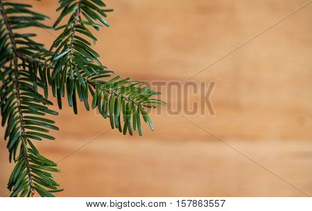 Branch christmas tree on wood background. Greeting card