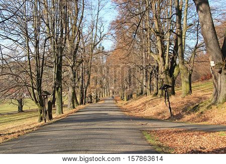 road in the avenue of trees on Hukvaldy, Czech Republic in autumn