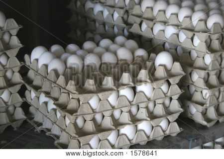 Freshly Collected Eggs