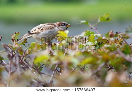 Sparrow is watching someone. Funny and beautiful birds around. Birds cute birds in nature. The life of wild animals.