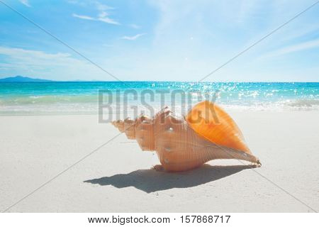 Tropical beach with seashell of giant mollusk
